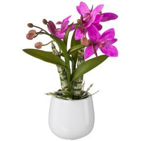 Japanorchidee im Keramiktopf, ca. 32 cm
