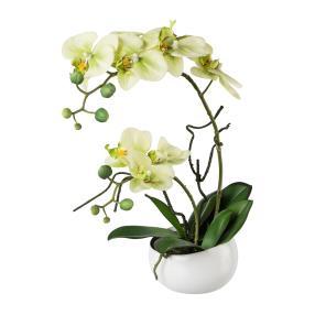 Phalaenopsis in Keramikschale, ca. 42 cm