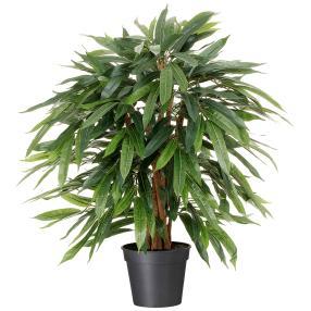 Ficus benjamina, ca. 80 cm, inkl. Topf