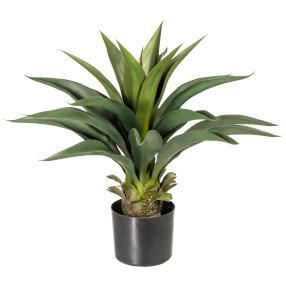 Agave grün, mit Pfalzentopf, ca. 56 cm