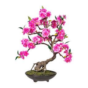 Bonsai Cerasum 50 cm, inkl. Topf