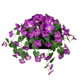 Petunie hängend im Blumenkasten lila