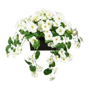 Petunie hängend im Blumenkasten weiß