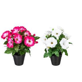 Petunie 2er Set weiß/pink, 28 cm
