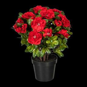 Azalee rot, 32 cm, im Kunststofftopf