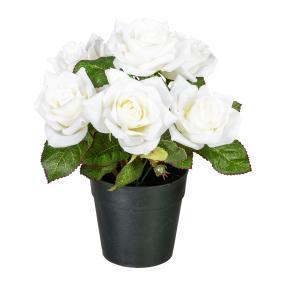 Rosenbusch im Kunststofftopf, weiß, 24 cm
