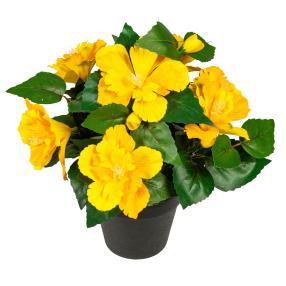 Hibiskus gelb im Kunststofftopf