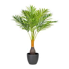 Kentia-Palme 70cm im Kunststofftopf