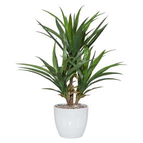 Yucca-Palme 70cm im Keramiktopf