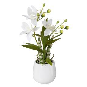 Japan-Orchidee weiß, inkl. Keramiktopf