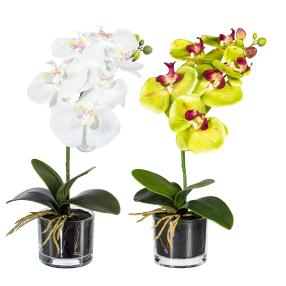 Orchidee in Glastopf, 2er Set, weiß/gelb