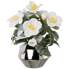 Christrose weiß gefrostet, Silberschale