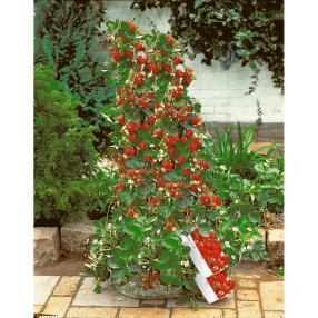 6 Kletter-Erdbeeren + 2 Deko-Ranktürme