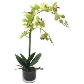 Orchidee im Glastopf, grün