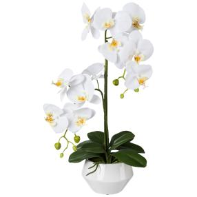 Orchidee  weiß, 52cm, in der Keramikschale