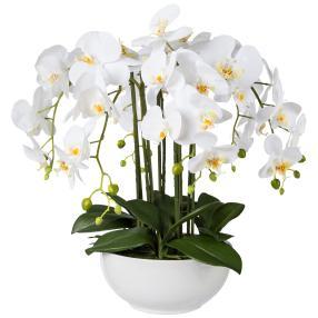 XL-Orchidee weiß, 54cm, in der Keramikschale