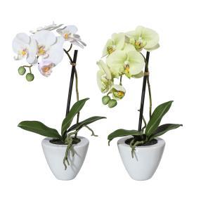 Orchideen 2er Set weiß-grün, 37 cm