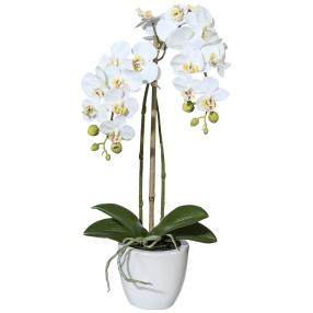 Mini-Phalaenopsis, weiß, 43 cm