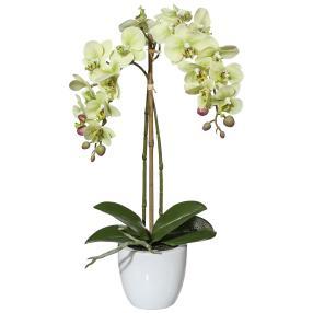 Mini-Phalaenopsis, grün, 43 cm