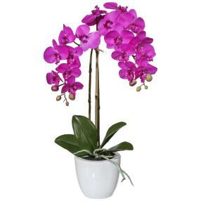 Mini-Phalaenopsis, pink, 43 cm