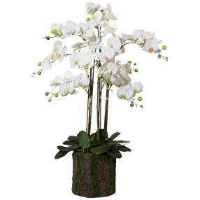 XL-Orchidee im Rindentopf, weiß, 92 cm