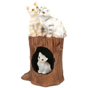 Solar-Katzenfamilie