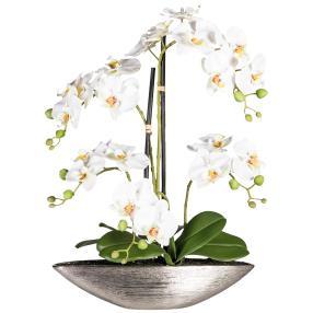 XL-Orchidee, 55cm, weiß