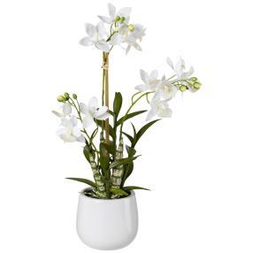 Japanorchidee, weiß, 55 cm