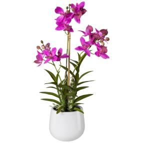 Japanorchidee, pink, 55 cm