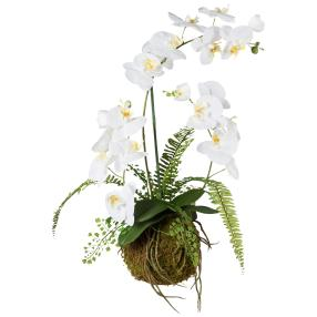 Orchideen-Farn-Arrangement, 65 cm