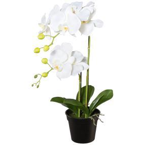 Orchidee im Topf, weiß, 55 cm