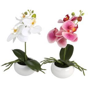 Orchidee 2er Set, fuchsia-weiß