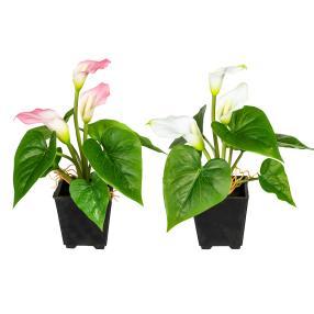 Mini-Calla, 2er-Set, 20cm, weiß-rosa