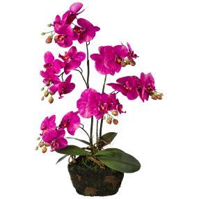 Orchidee im Moosballen, pink, 60 cm