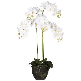 XXL-Orchidee im Ballen, weiß, 100 cm