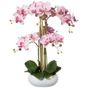 XL-Orchidee, weiß-lila, 53cm