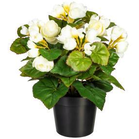 Begonienbusch weiß 28cm