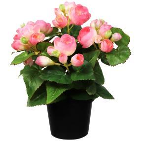 Begonienbusch rosa 28cm