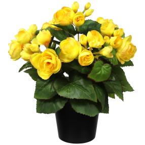 Begonienbusch gelb, 28 cm