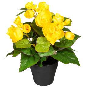 Begonienbusch gelb 24cm