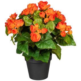 Begonienbusch orange, 35 cm