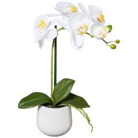 Orchidee weiß, 39 cm, im Keramiktopf