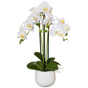 Orchidee weiß, 60 cm