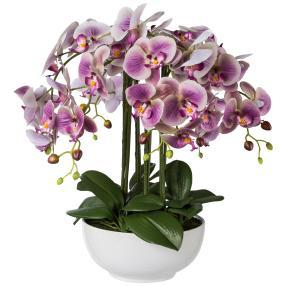 XXL-Orchidee lila 54 cm in Keramikschale