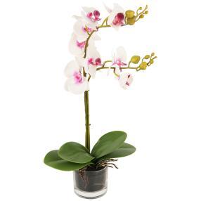 Orchidee im Glas weiß-lila 52cm