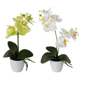 Orchidee 2er Set, hellgrün/weiß