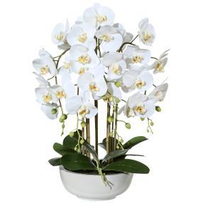 Orchidee weiß-grün 66cm in Keramikschale