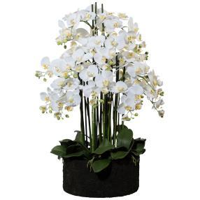 XXL-Orchideen-Arrangement im Erdballen, 93 cm