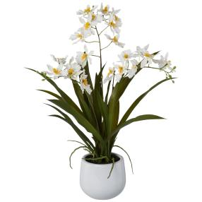 Gambia-Orchidee ca. 50 cm, weiß