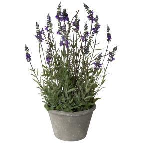 Lavendel im Steinguttopf, 51 cm